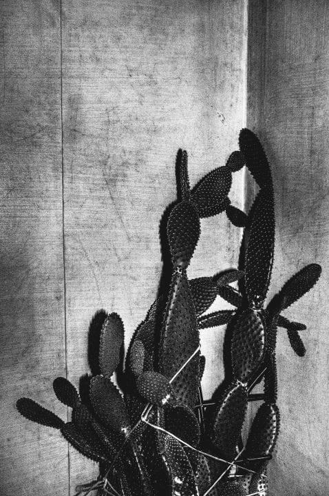 cactus black and white photography with high contrast and flash by francesco merlini