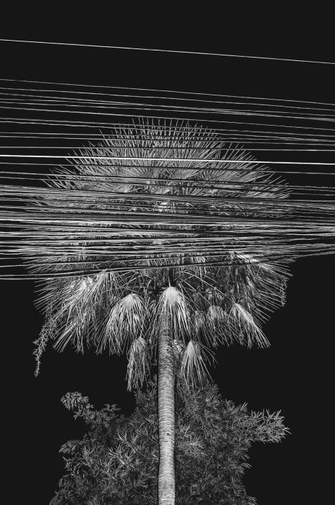palm tree and electric lines black and white photography with high contrast and flash by francesco merlini