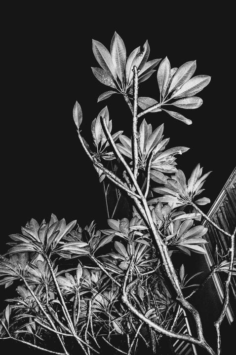 tree and leaves black and white photography with high contrast and flash by francesco merlini