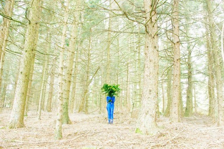 forest landscape color photography by inge van heerde