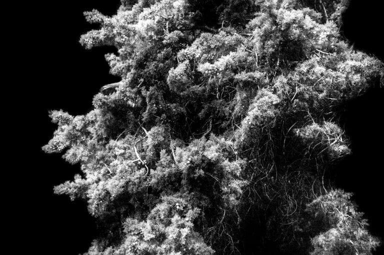 fotografía en blanco y negro, poca profundidad de campo, alto contraste, por Francesco Merlini