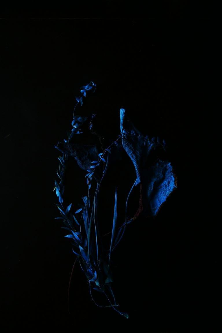 blue flower representing a vagina photography by inge van heerde