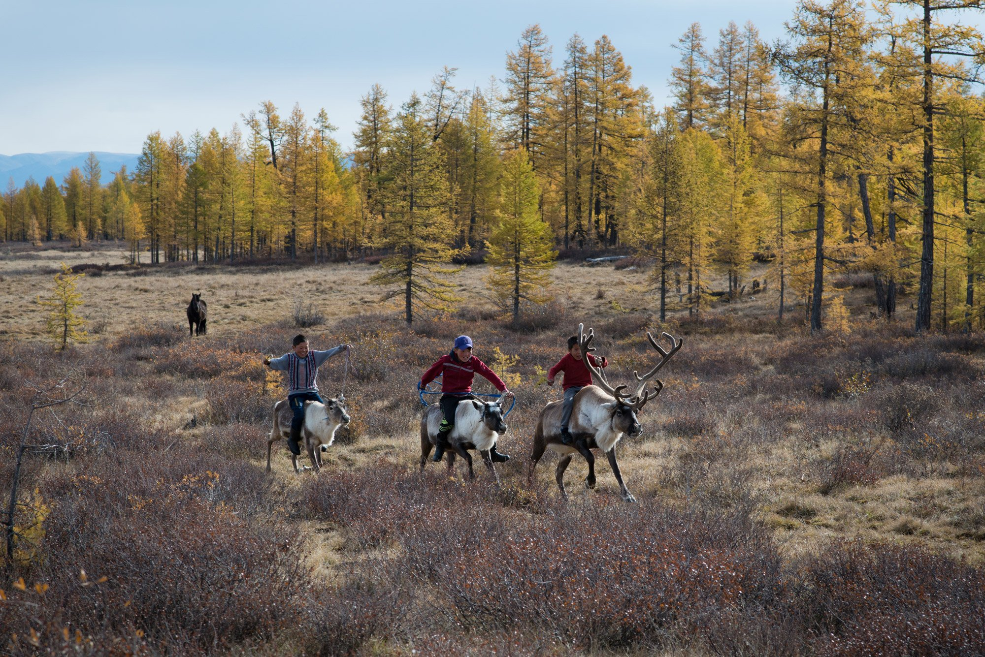 Le peuple Tsaatan, Mongolie, série de photographies, éleveurs de rennes