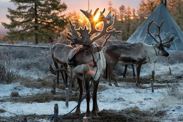 Le peuple Tsaatan, Mongolie, série de photographies de Madoka Ikegami, éleveurs de rennes