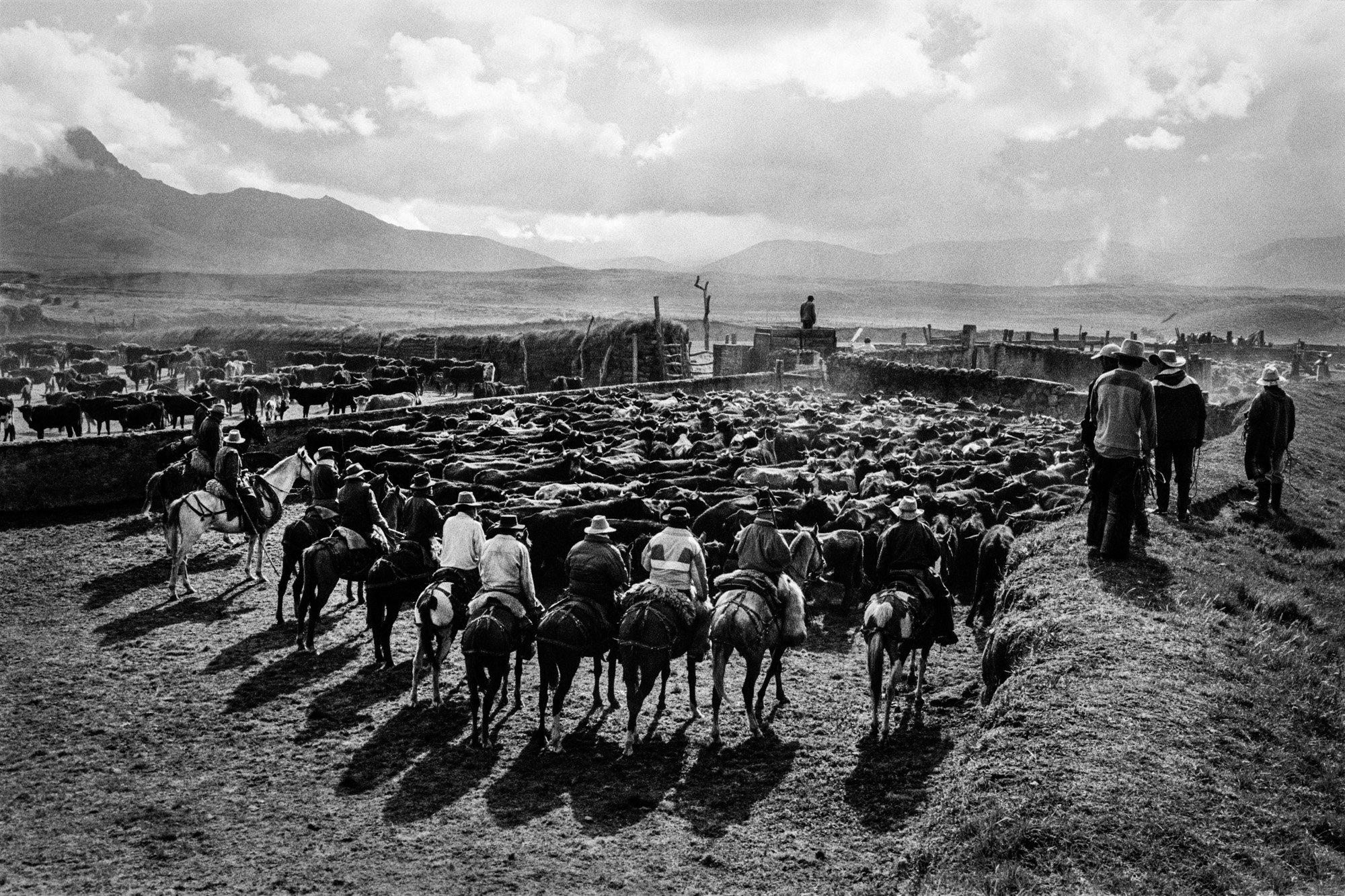 black and white photo of cowboys riding horses