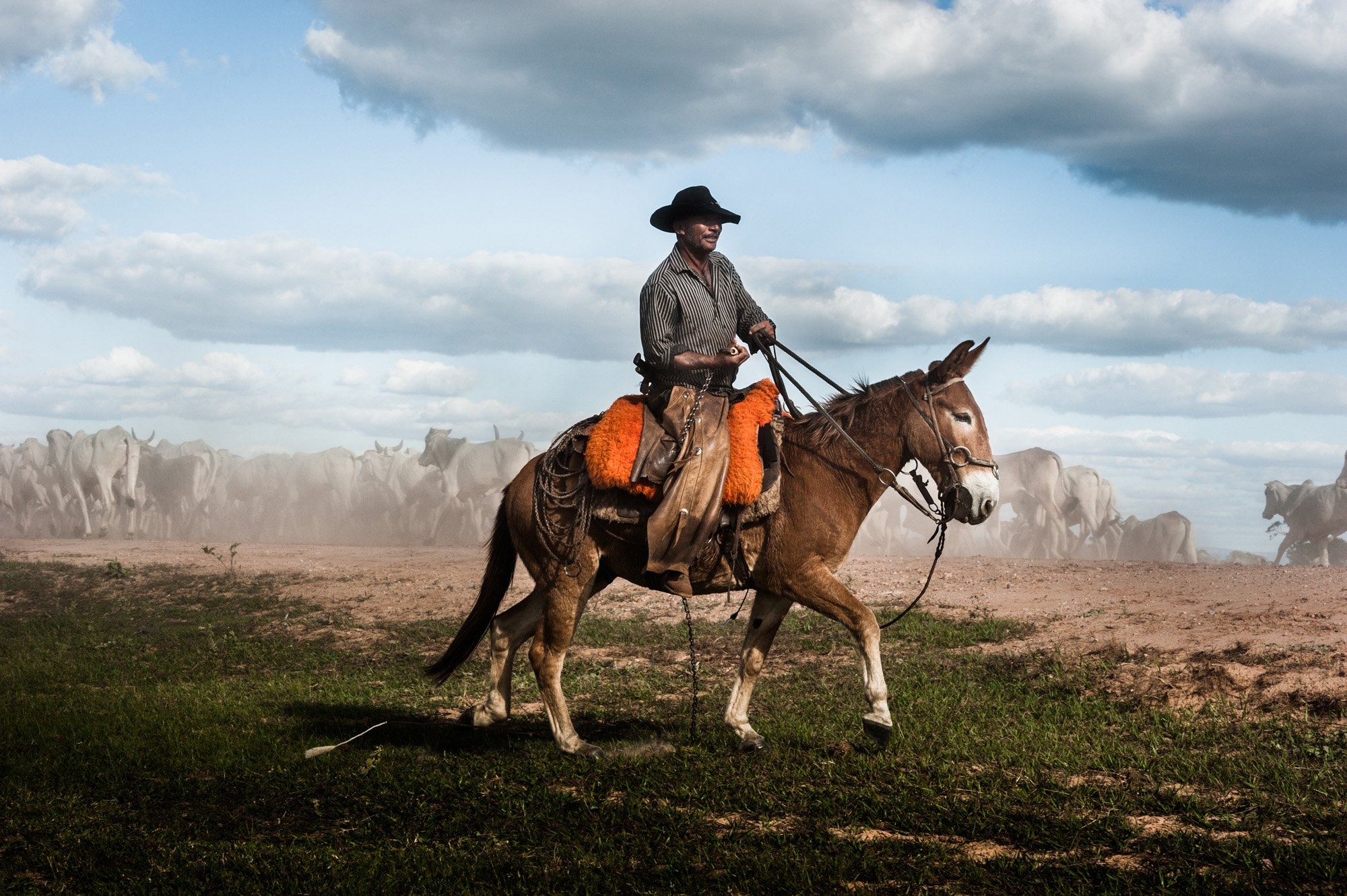 color photograph of a cowboy riding his donkey