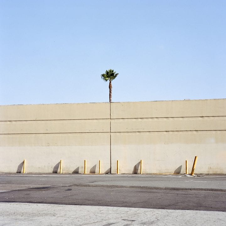 tree growing in urban or industrial setting, color photography by sinziana velicescu