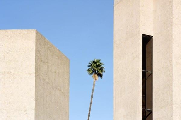 árbol que crece en un entorno urbano o industrial, fotografía en color por sinziana velicescu