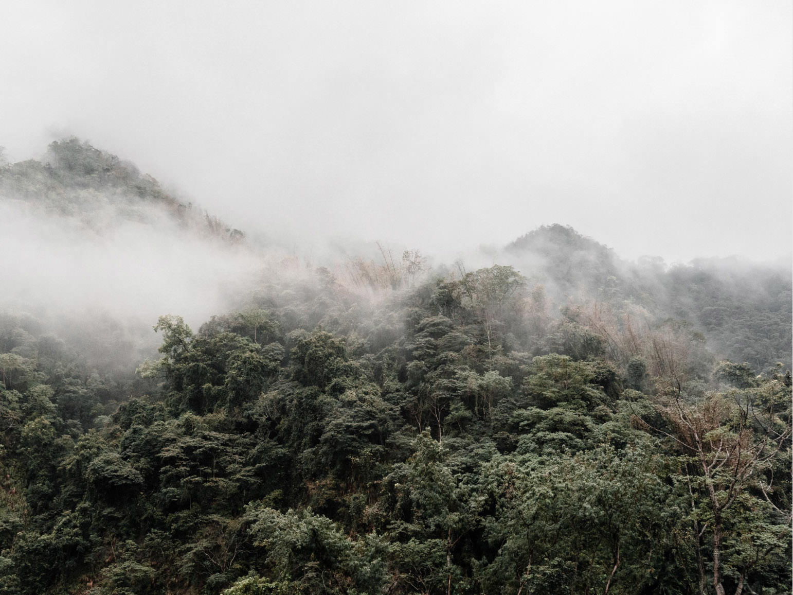 Foggy Mountain photography by Cody Cobb