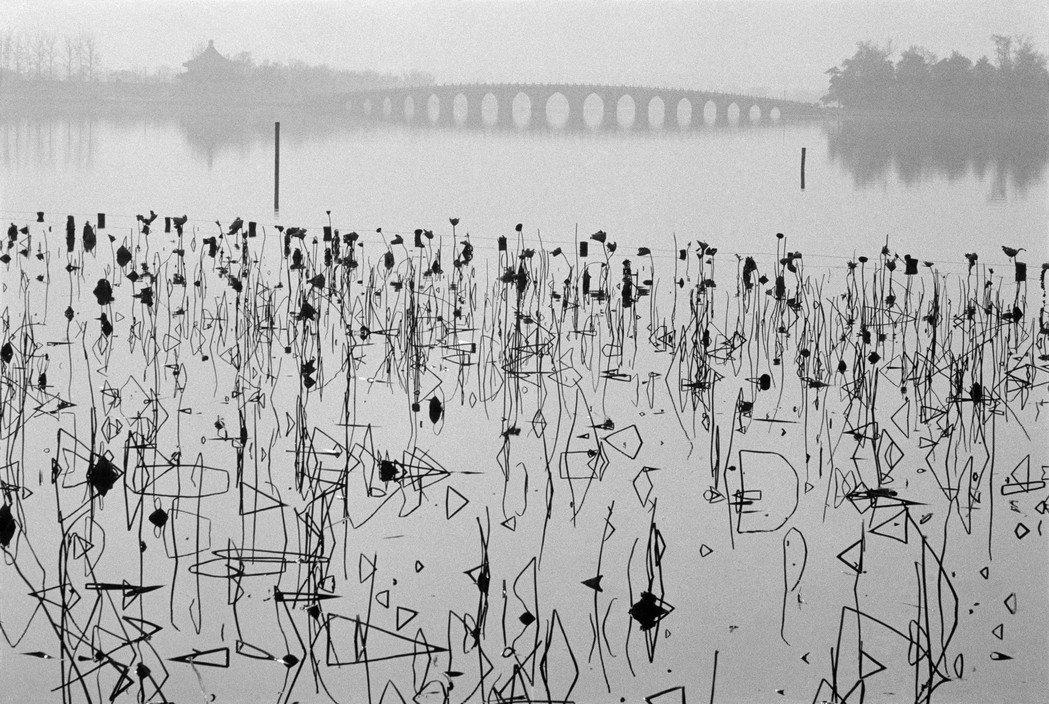 Fleurs de lotus mortes sur le lac de Kunming, Pékin, 1964 par René Burri Photographie noir et blanc Chine