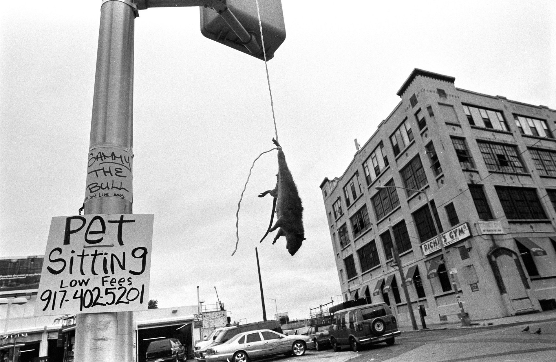 mouse hanging, street photography, black and white Bushwick, Brooklyn, 2005 © Boogie