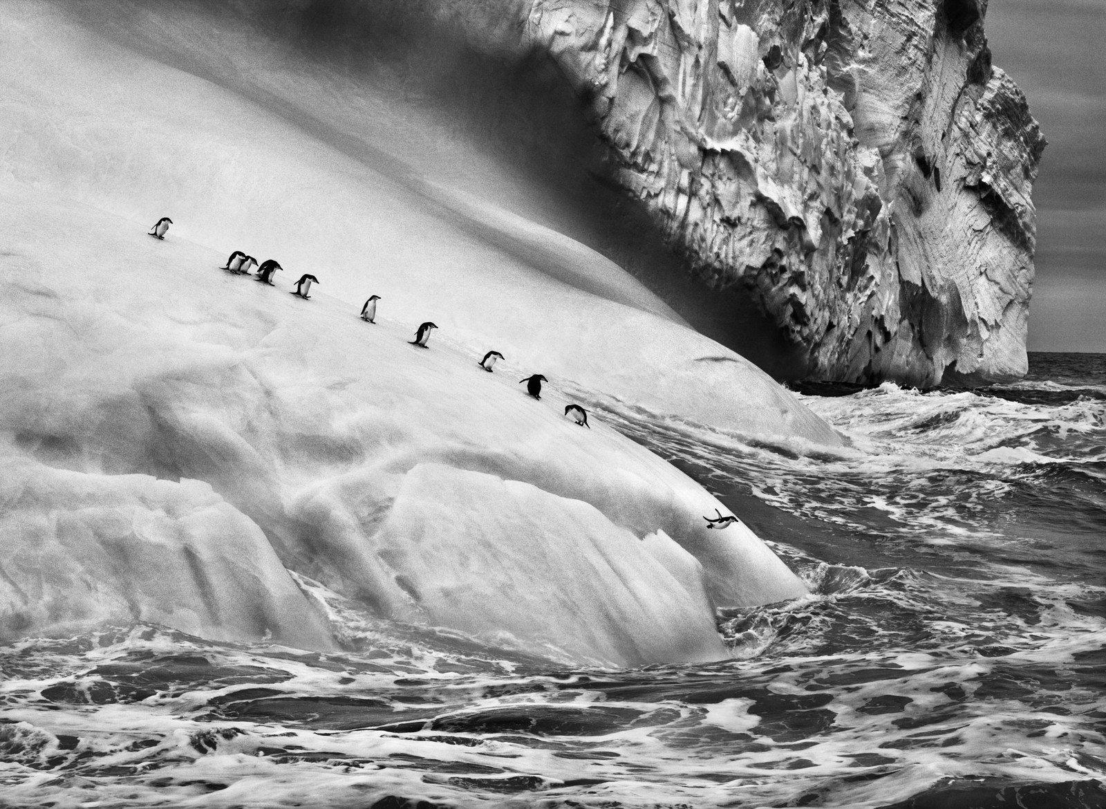 Pinguini sottogola su un iceberg tra le isole Zavodovski e Visokoi, Isole Sandwich meridionali, 2009 di Sebastião Salgado