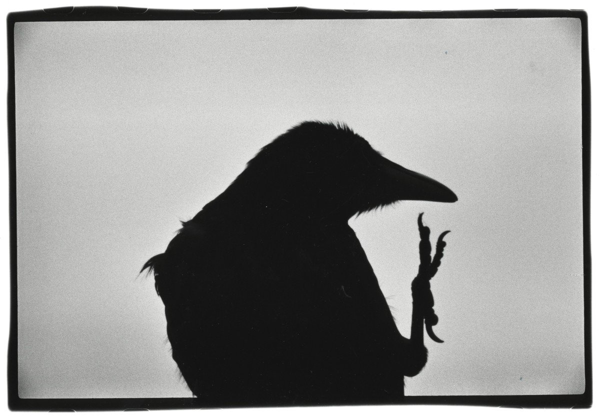 Erimo Cape, 1976. De Solitude of Ravens © Masahisa Fukase Archive