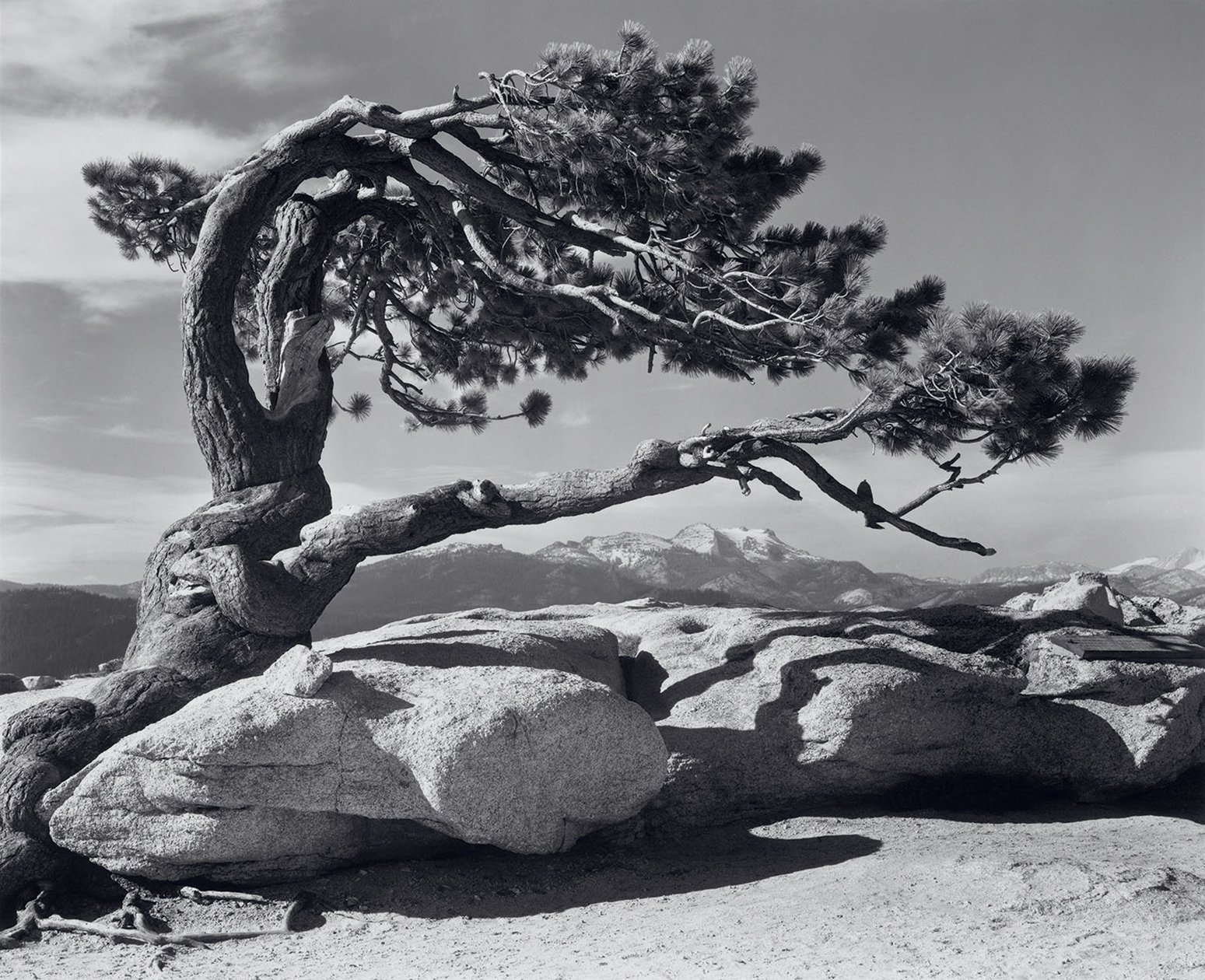 History of Landscape Photography Jeffrey Pine Sentinel Dome Yosemite by Ansel Adams