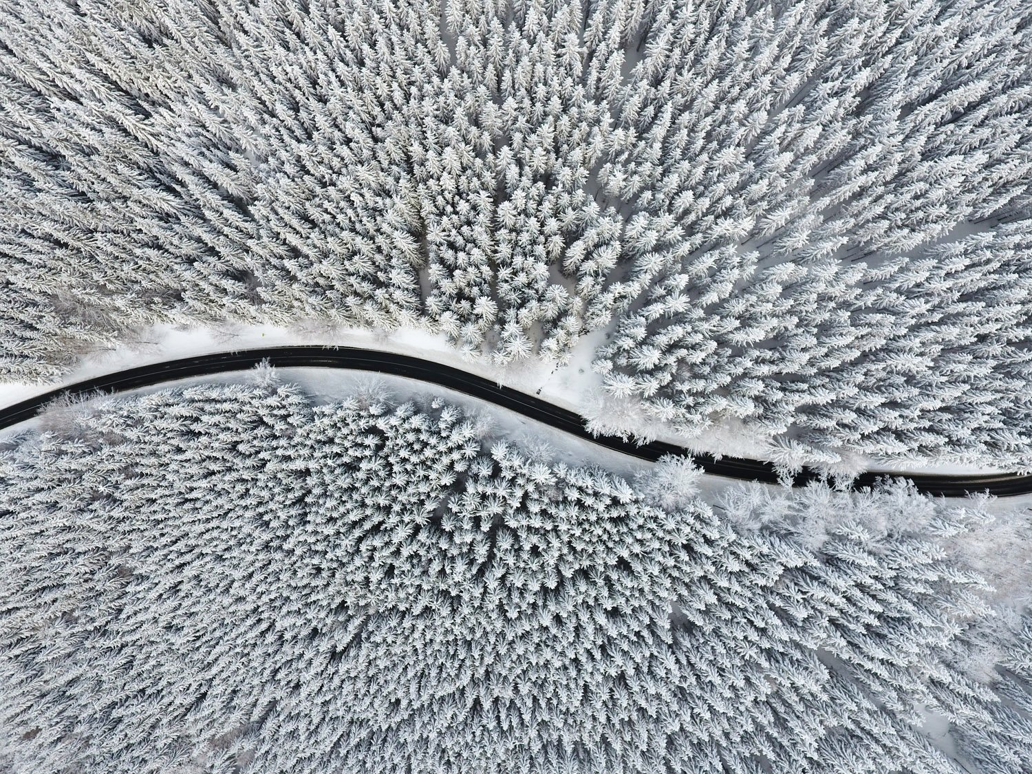 Landscape Photography, snow forest and road