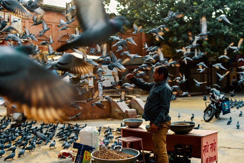 Color Street Photography in India, birds being fed