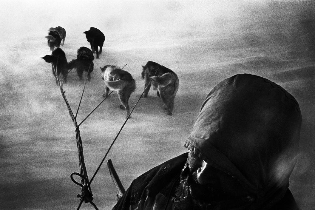 A hunter and his dog sled caught in a snowstorm. Tiniteqilaaq, Greenland, 2000 © Jacob Aue Sobol