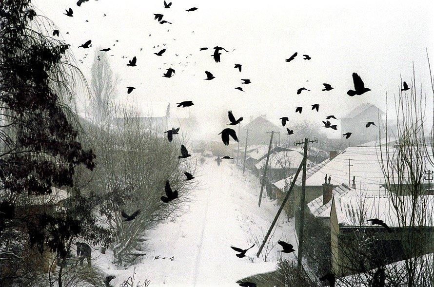 Des merles survolent une banlieue de Prishtina, 31 décembre 1999 © Andrew Testa