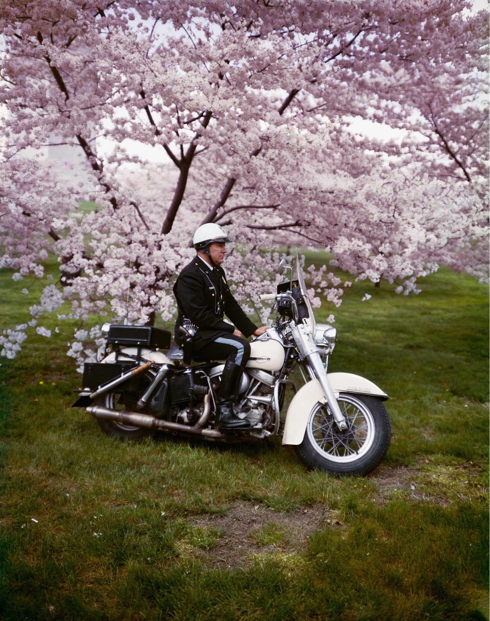 Frühling, Washington, 1965, Farbfotografie von Evelyn Hofer