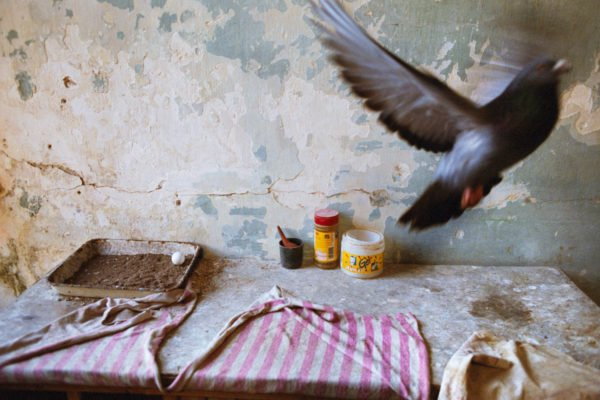 À l'intérieur d'un pigeonnier. La Havane, Cuba 2007 © Rebecca Norris Webb