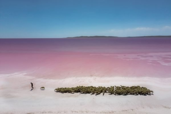 Travel photograph by F.Dilek Uyarok of a goat herder at pink Lake Tuz in Turkey