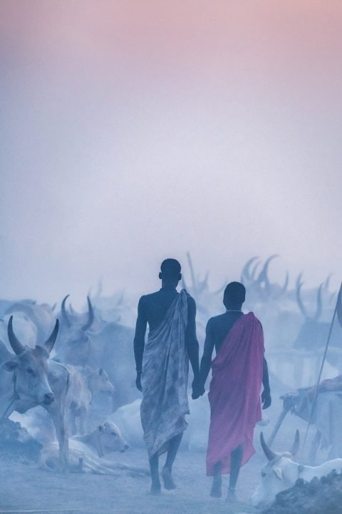 Travel photograph by Trevor Cole of two men surrounded by their cattle walking in Khartoum, Sudan