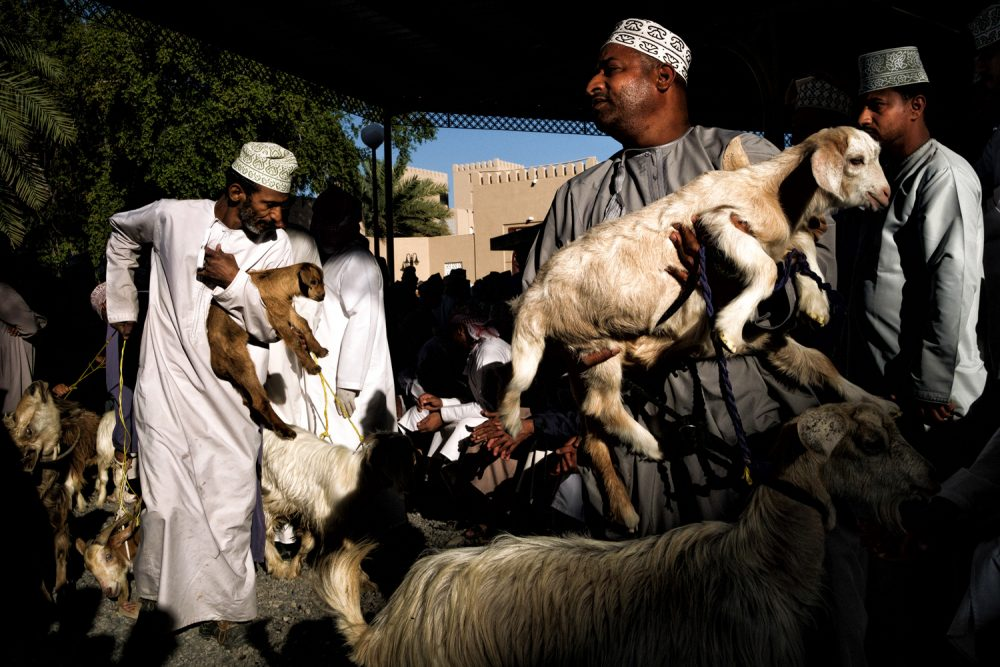 Goat auctions in Nizwa, Oman, color photography by Maude Bardet