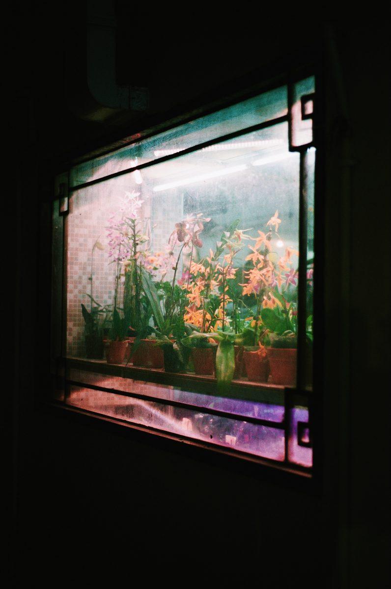 Photographie de voyage couleur par Pia Riverola, fleurs, fenêtre, Hong Kong