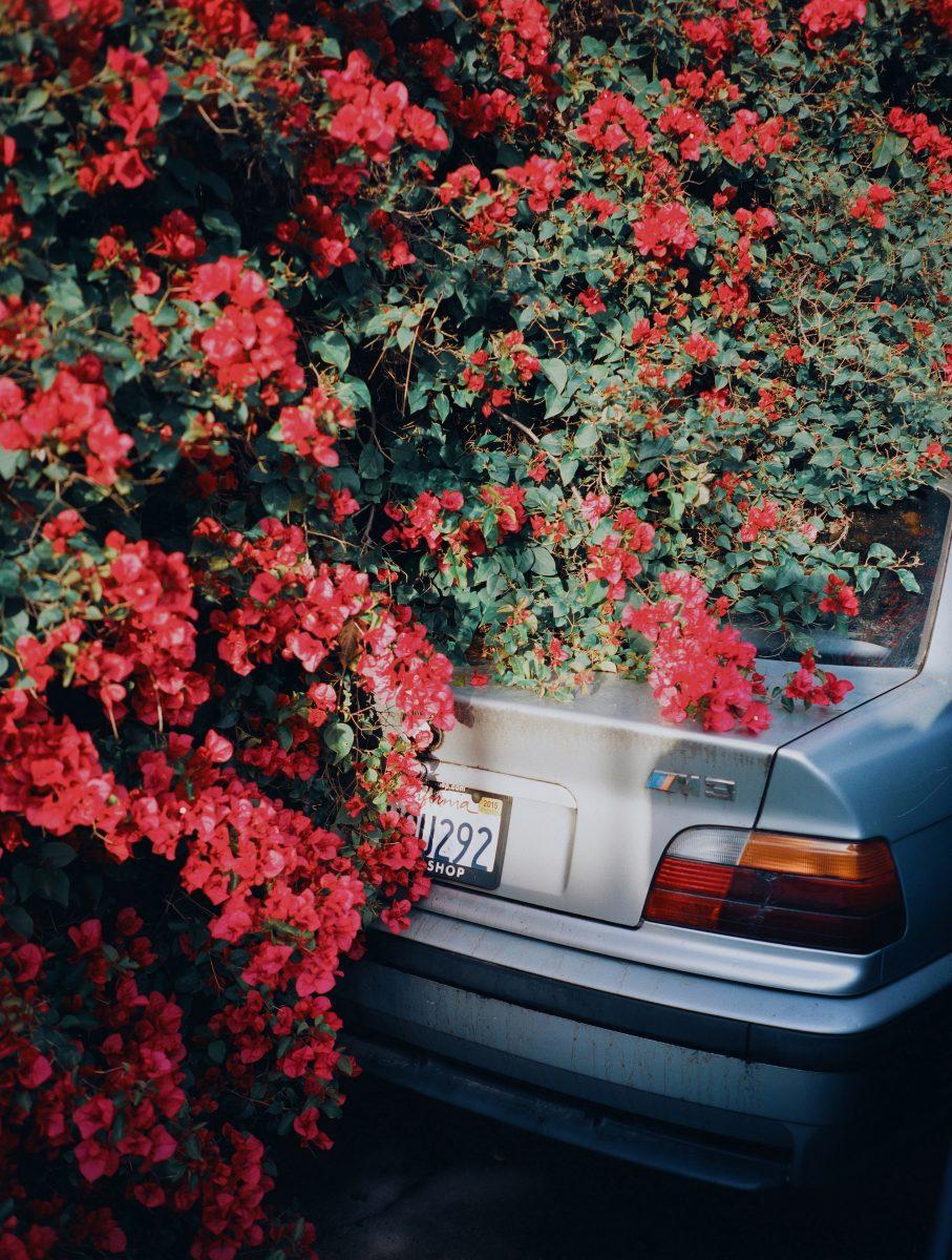 Color street photography de Pia Riverola, coche y flores Los Ángeles