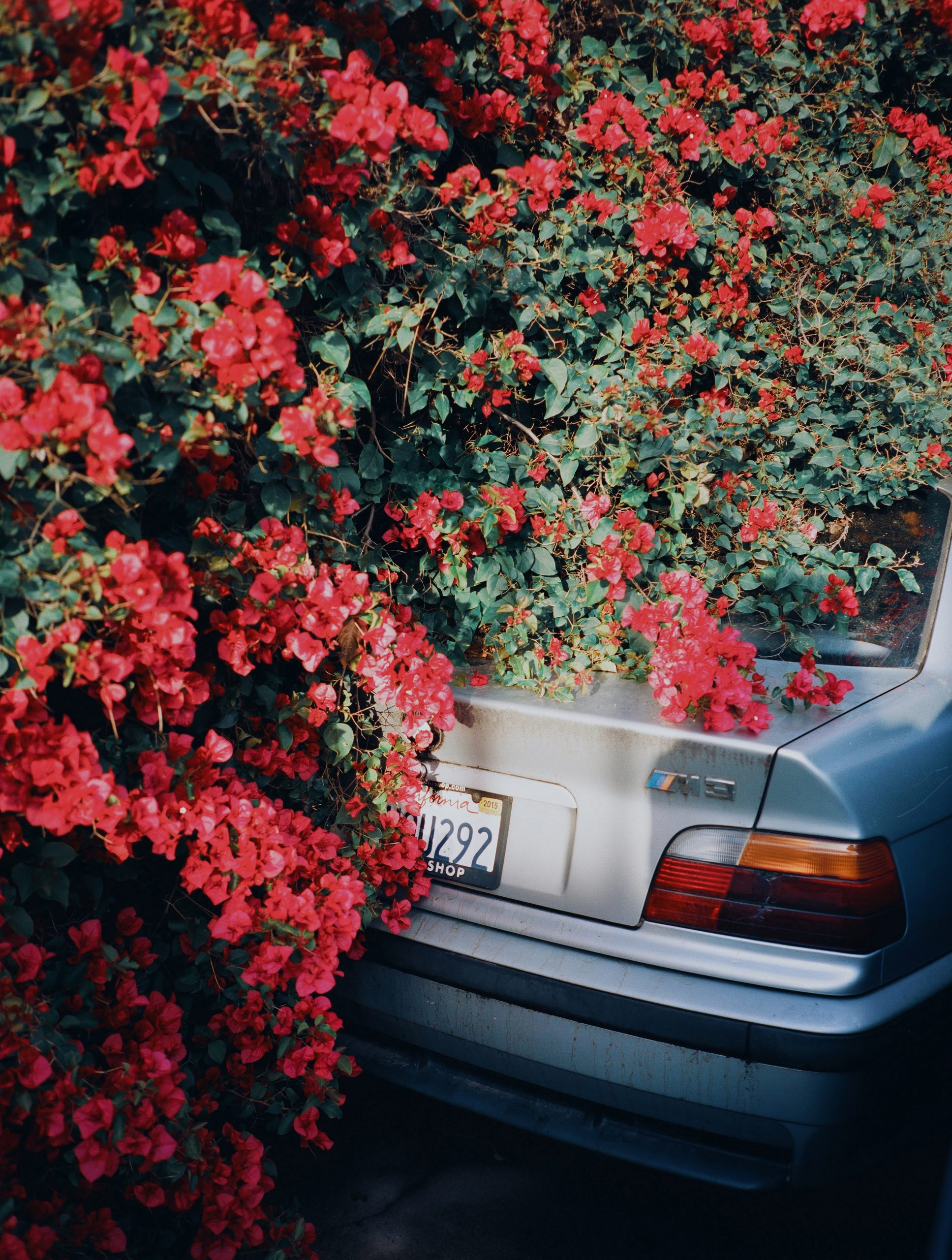 Color street photography by Pia Riverola, car and flowers Los Angeles
