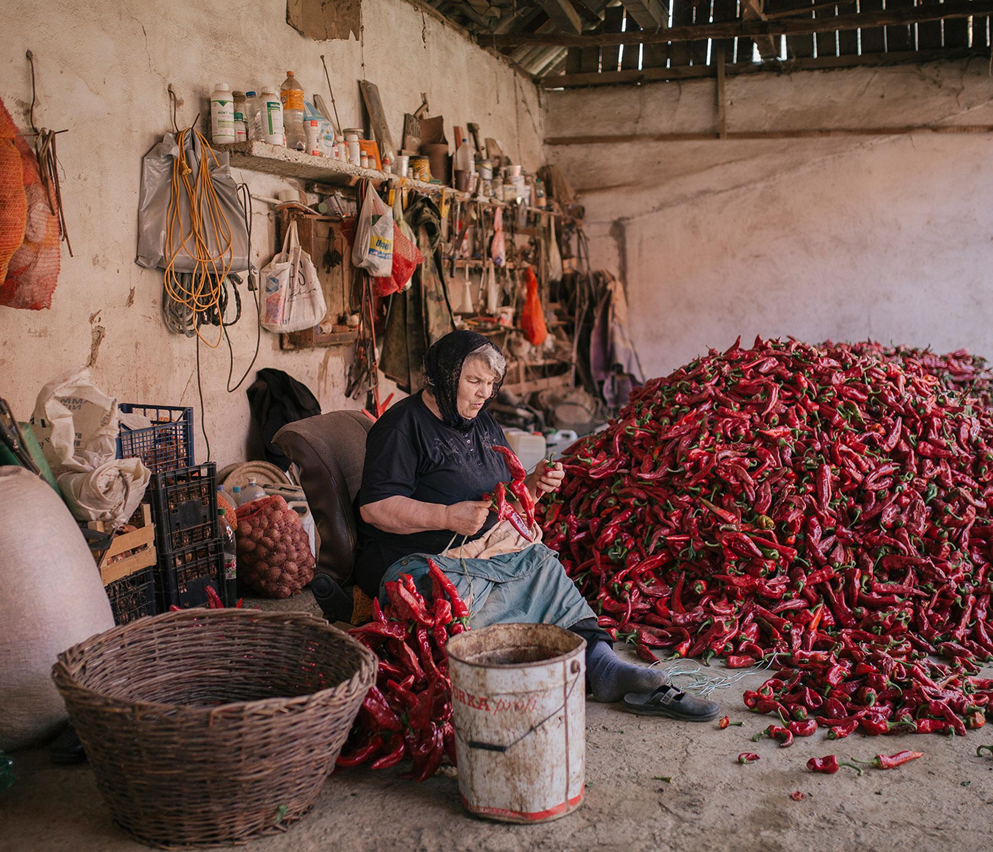 Une femme âgée prépare des fils de paprika rouge le 19 septembre 2020 à Donja Lokosnica, Serbie