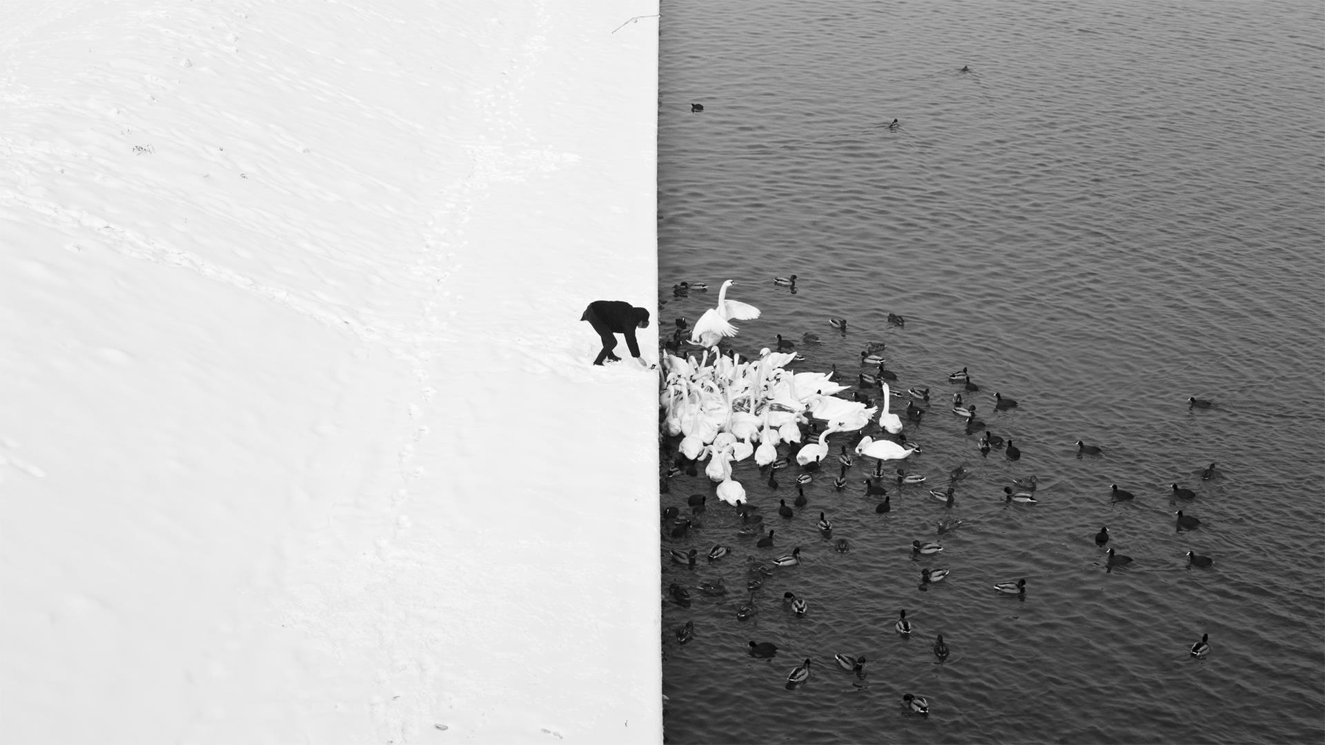 Black and white photograph of man feeding swans and ducks by Marcin Ryczek