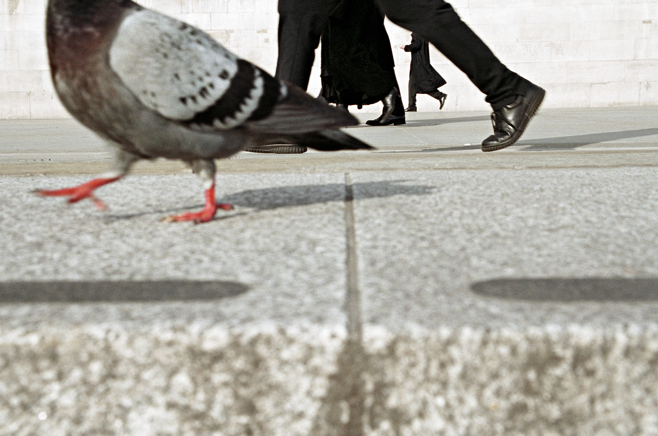 Color street photograph of pigeon and mens feet on the street in London by Matt Stuart