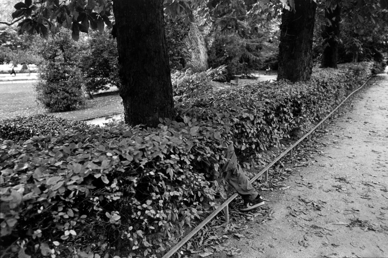 Black and white street photography by Richard Kalver, a leg disappears into a bush in Luxembourg Gardens Paris.
