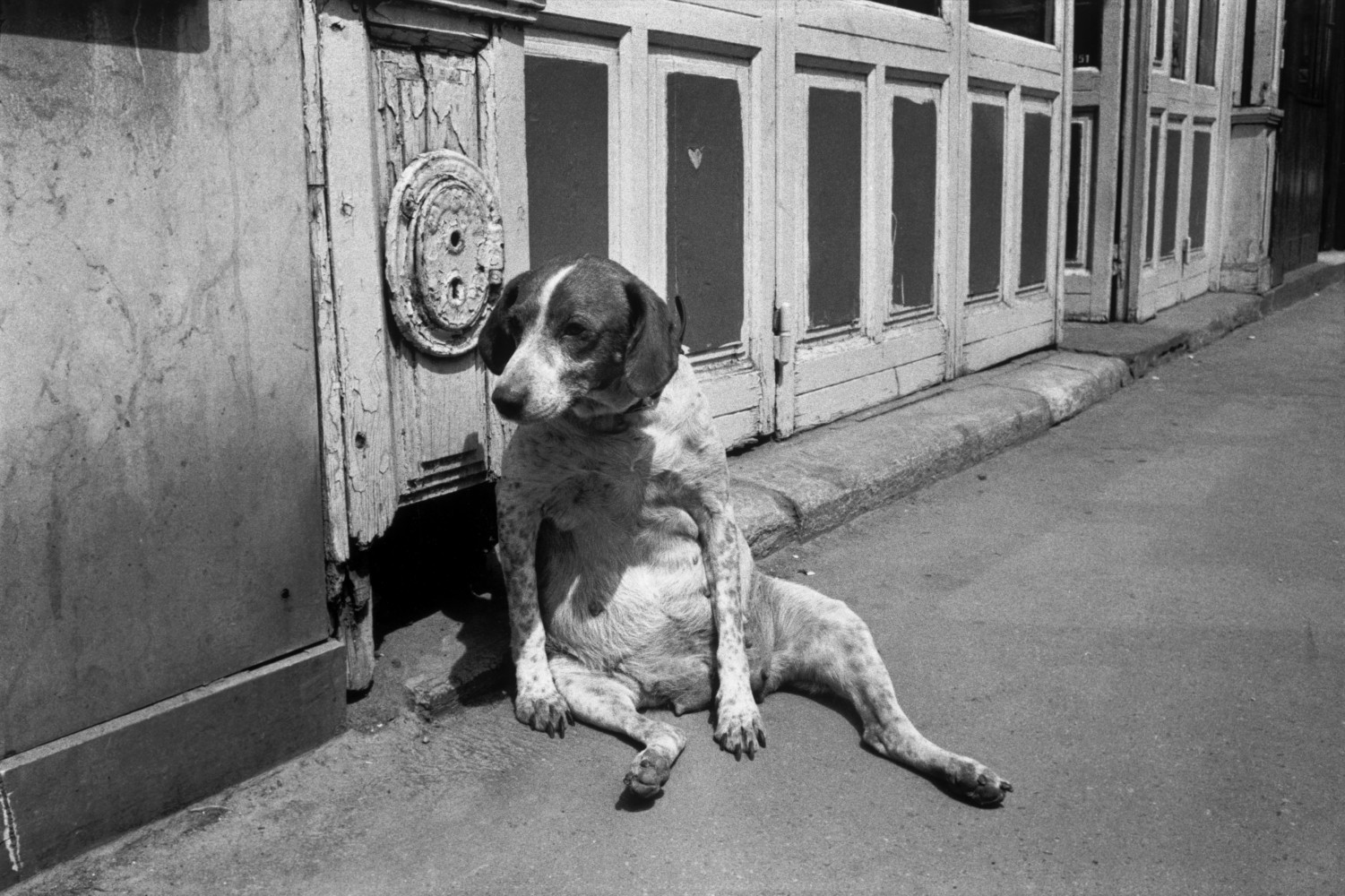 Black and white street photography by Richard Kalvar, Dog sat on the street in Paris
