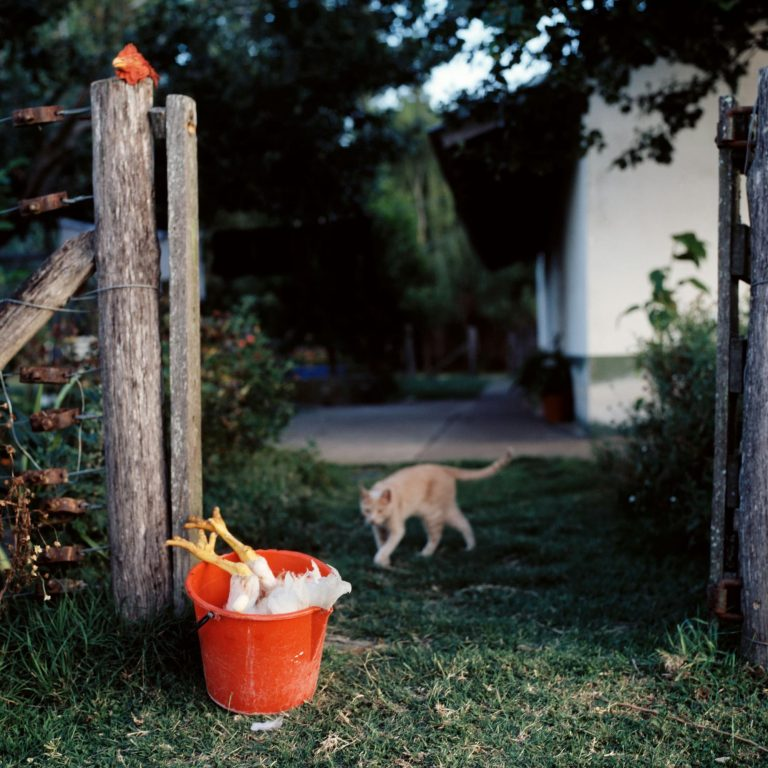 Color photographer Alessandra Sanguinetti