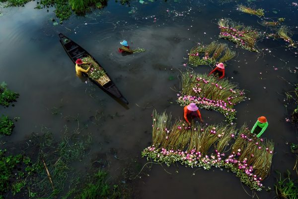 Color photograph, fishermen work to collect waterlilies, Finalist of the People Competition