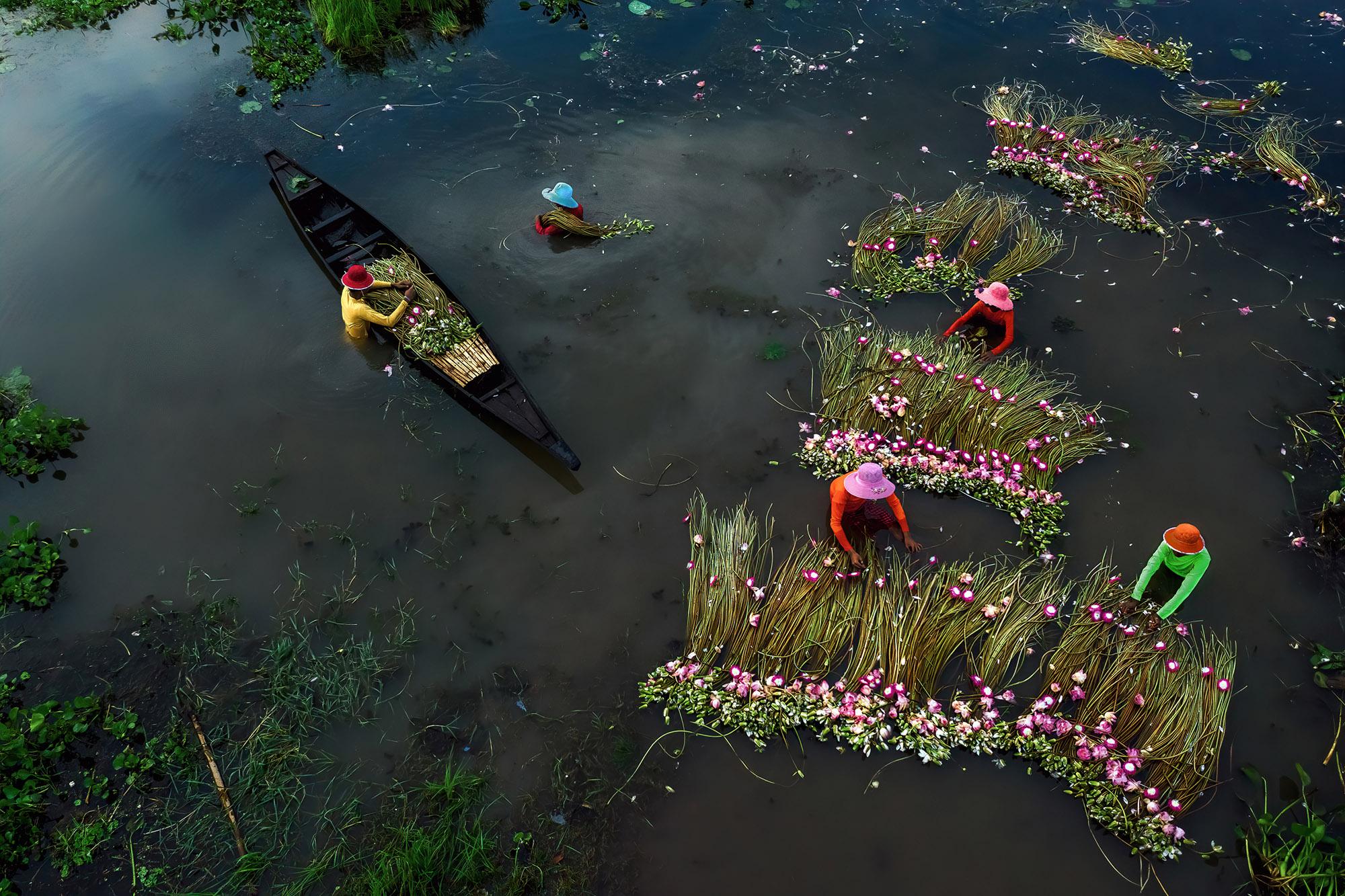 彩色照片,渔民收集睡莲的工作,人民竞赛的决赛入围者