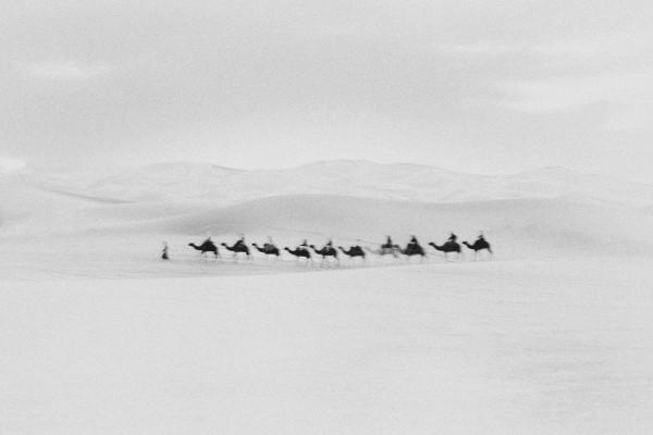 black & white image by Bastiaan Woudt, camels, desert from his Karawan series 2016