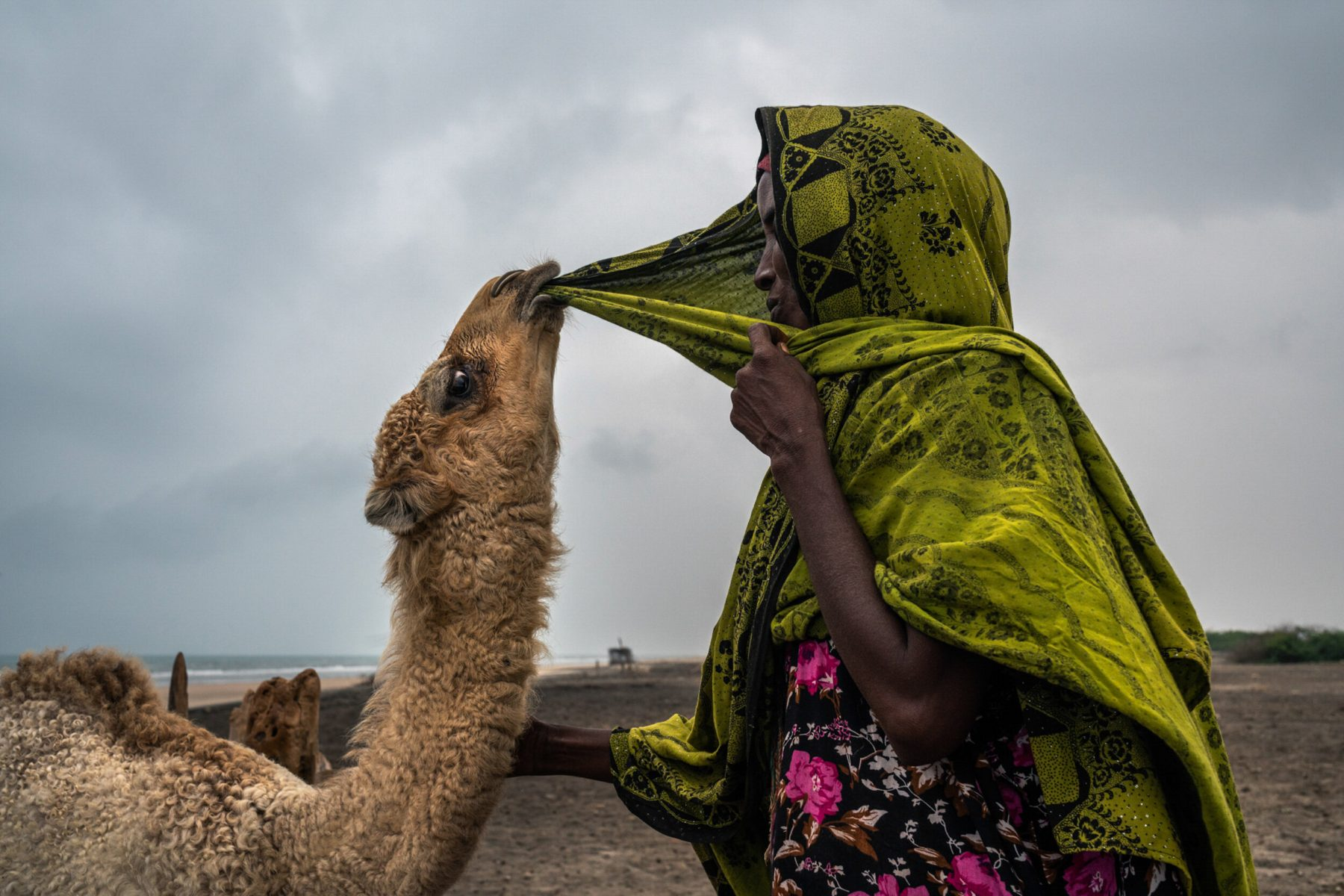Color photo, woman and camel, Somalia by Nichole Sobecki