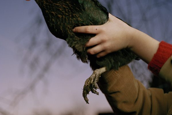 Open Call - Color photograph of a chicken byMegan Auer