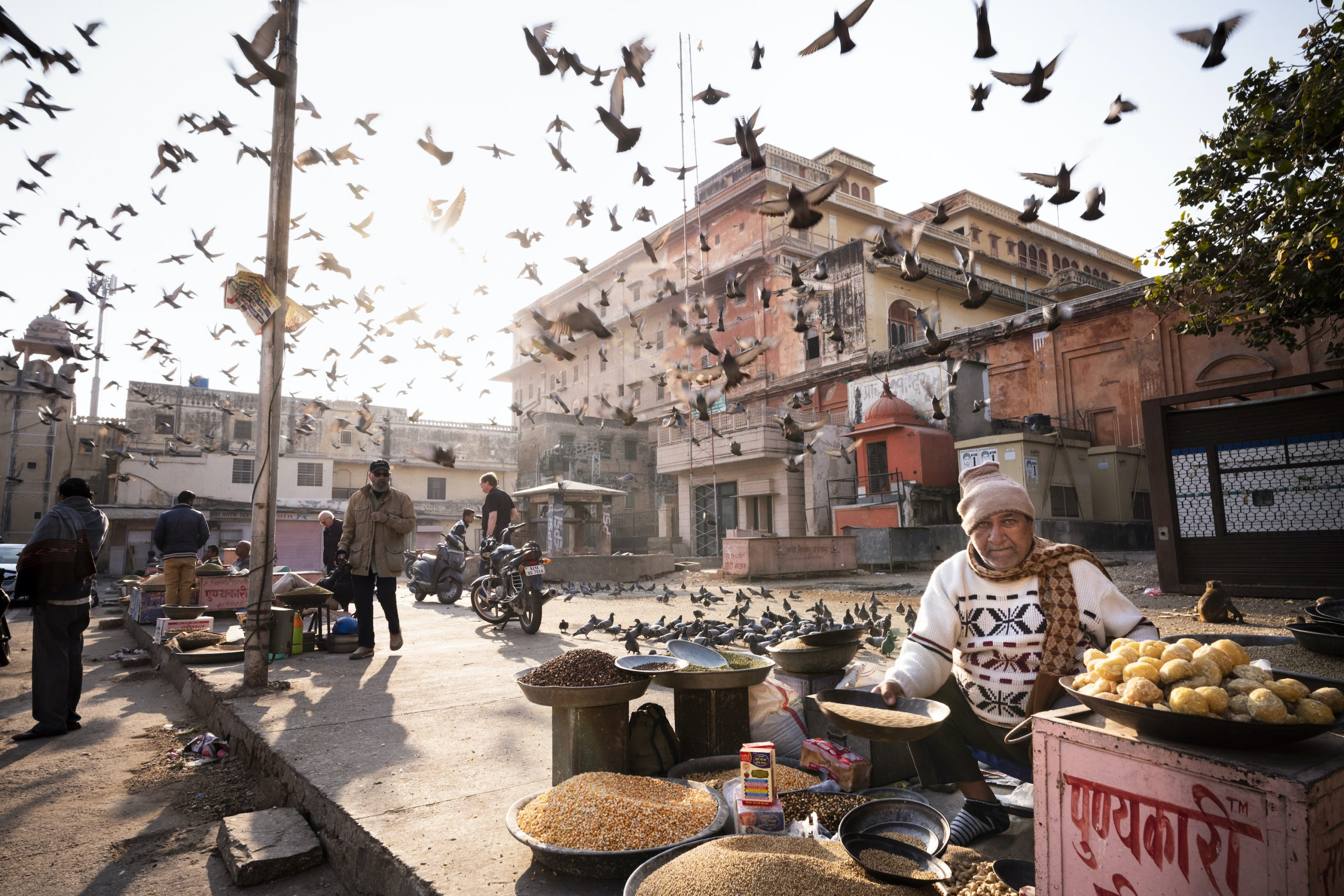 color street photography of man and pigeons in Jaipur, India