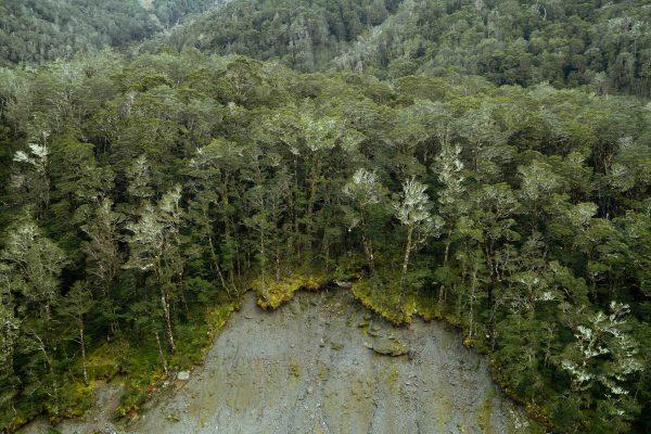 Photographie couleur paysage d'une forêt par Louise Coghill