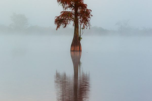 lanscape color photograph of a tree in water in florida by Alex Armitage