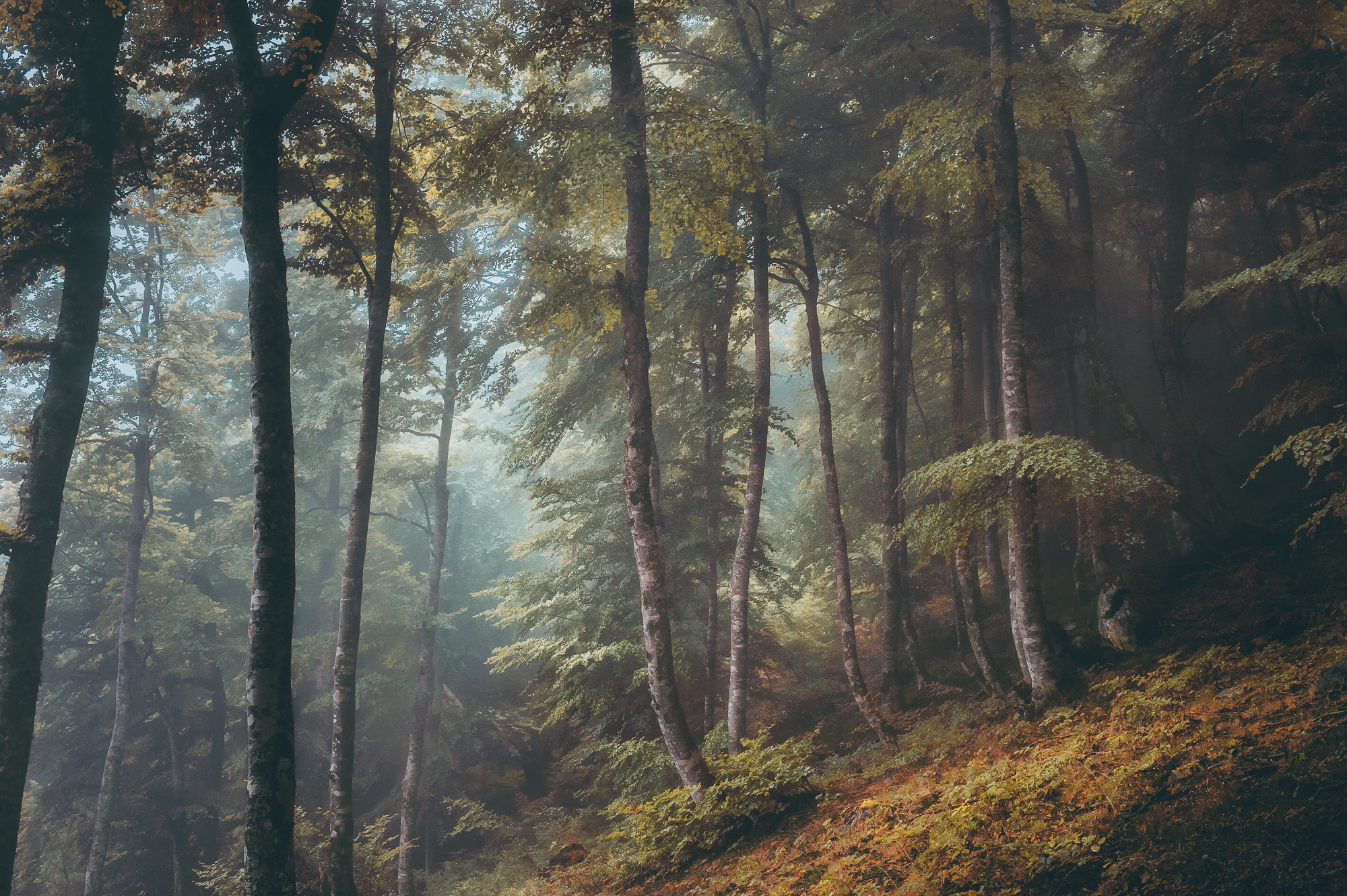 lanscape color photograph of a forest in Pyrénées, France by Yohan Terraza