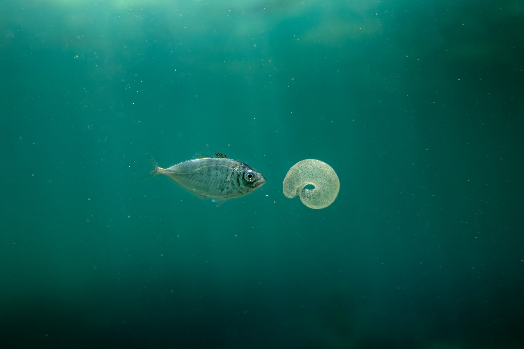 Color underwater photography by Matthew Bagley. Fish and jellyfish, ocean, fine art, marine.
