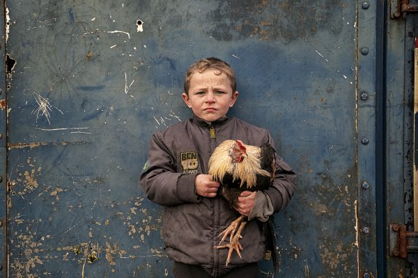 color portrait of a young Irish traveller boy and his rooster by Bob Newman