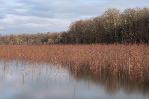 color landscape photograph of Pond of Commelles, France