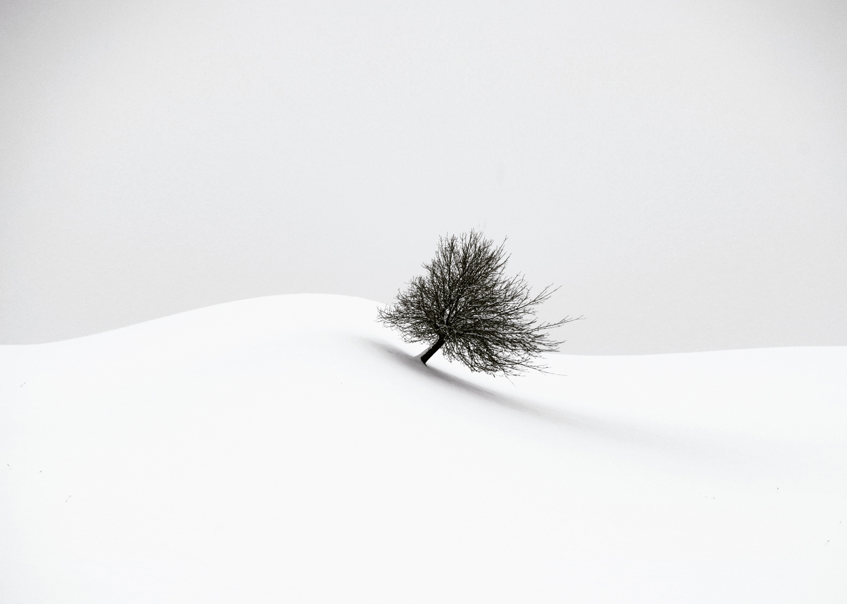 fine art black and white landscape photograph of a lonely tree in Switzerland